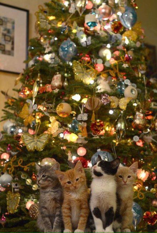 natal gatos
