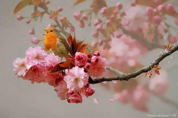 passaro na flor rosa
