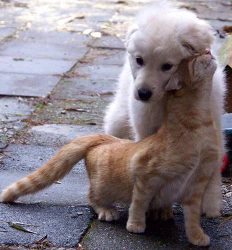 cachorro e gato amizade