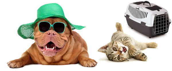 cachorro gato viagem