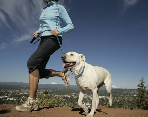 489661f30002b A caminhada é a atividade mais popular para se fazer com o cão. Além de  fortalecer a musculatura do animal, a prática também alivia o estresse e  reduz a ...
