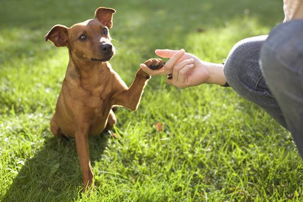 Dog touching hand with paw