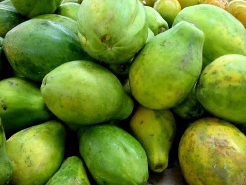 mamaão papaia xenia2