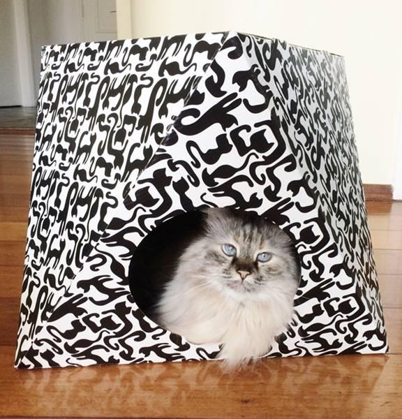 Octa Cat - Foto Oficial
