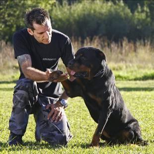 cachorro treino