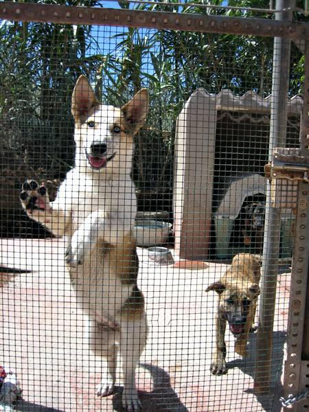 abrigo animais