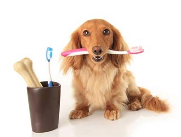 cachorrinho escova dente