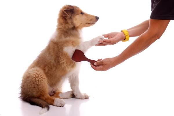escovando cachorro