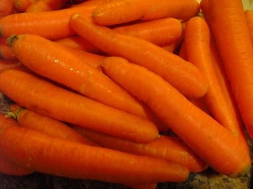 cenouras Scarletina