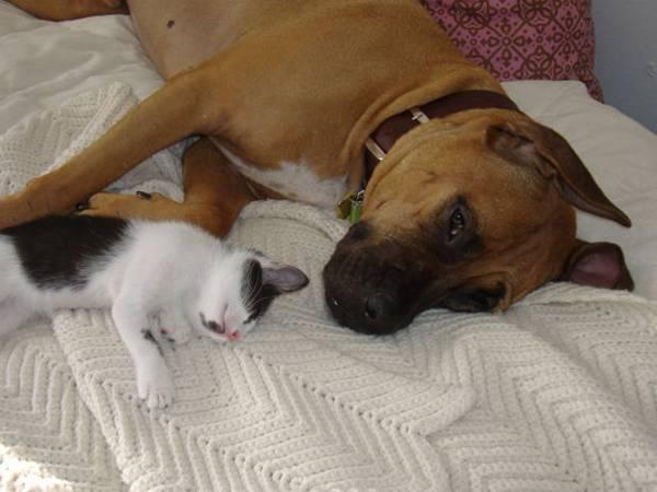 gato e cachorro elemenoperica