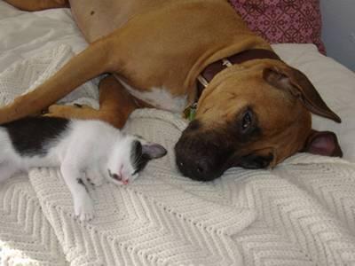 gato e cachorro elemenoperica2