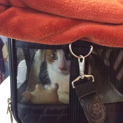 Melanie Wynne gato no avião