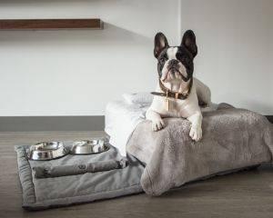 nomaa- cachorro