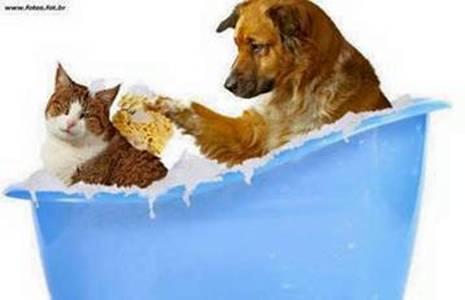 cachorro banho gato g