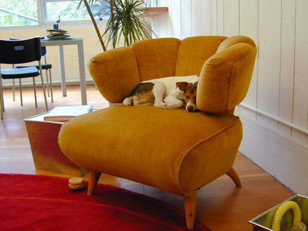 cachorro sofá