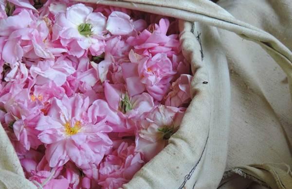 aromaterapia-terra-flor