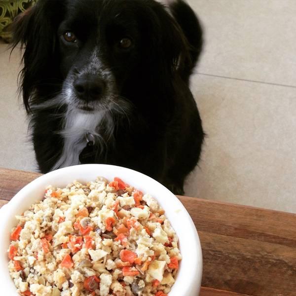 cachorro simple dog comida
