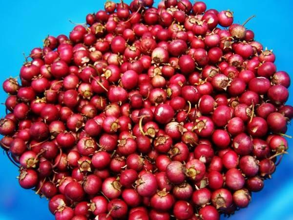 cranberry Melodi2