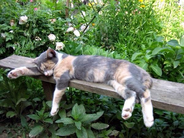 gatinha dormindo no jardim