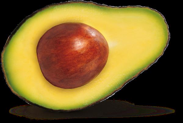 abacate-avocado-org