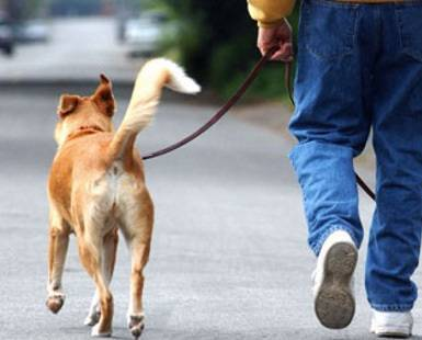 A02JAA Man walking dog