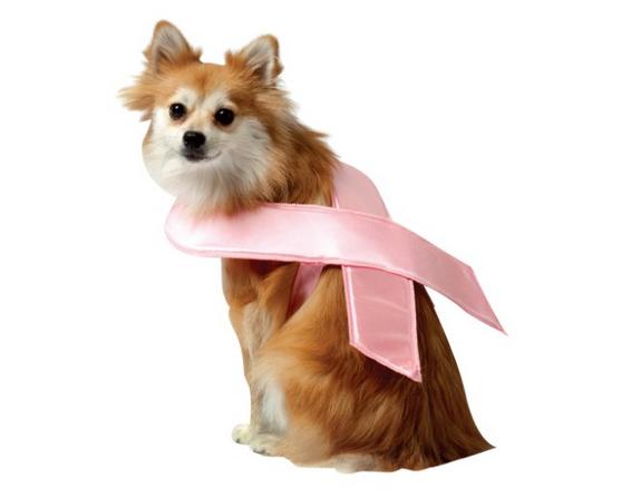 cachorra-rosa-iheartdogs