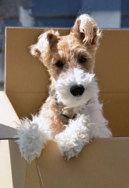 cachorro-na-caixa-pinteres