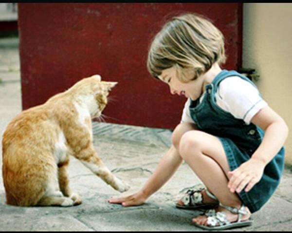 gato-e-menina
