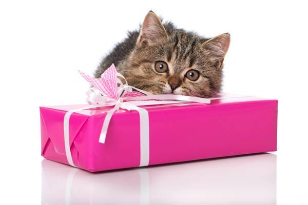 Kätzchen mit Geschenk