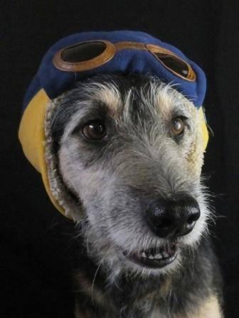 cachorro-2