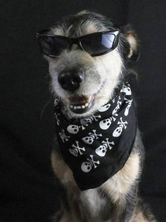 cachorro-3