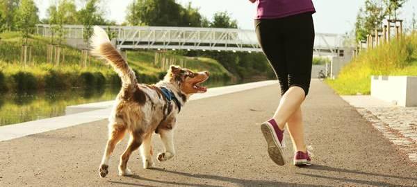 5623bea3bd257 Bom pra cachorro  confira quais os melhores exercícios físicos para fazer  com o pet