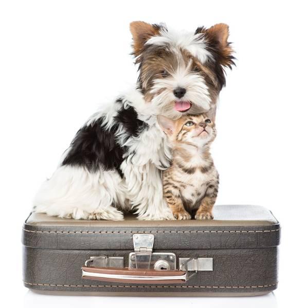 cachoro-gato-viagem