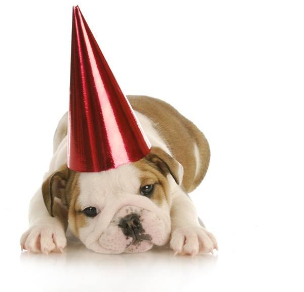cachorro-festas