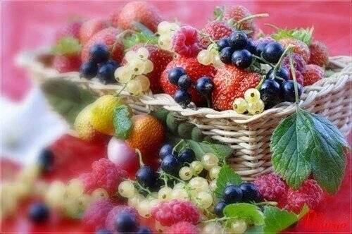 frutas-vermelhas-66