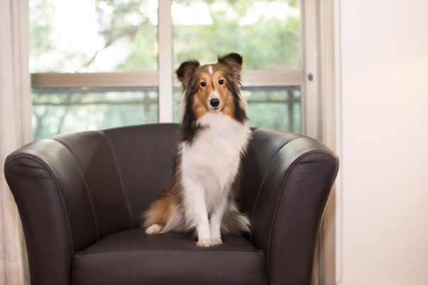 cachorro-hotel