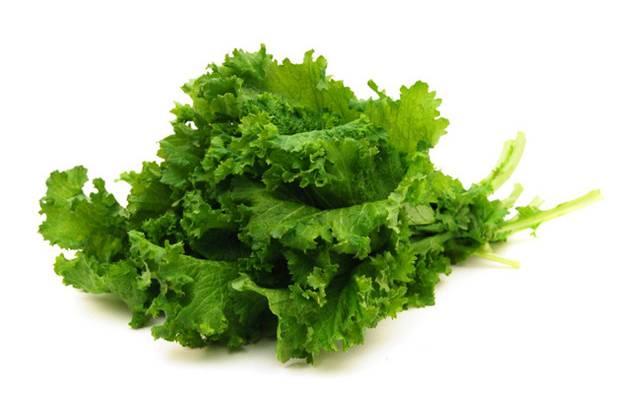 folhas-verdes-nutri-living