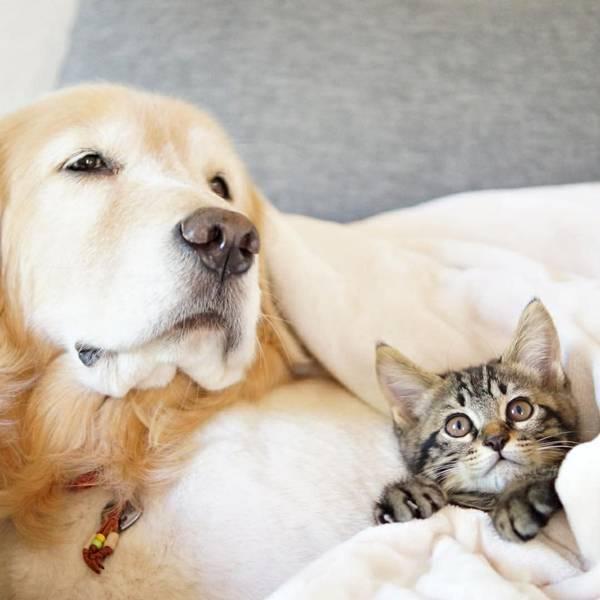 cachorro-e-gato-na-cama