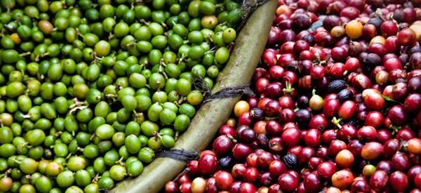 cafeina-cafe-verde-dieta