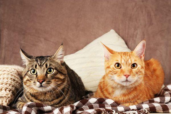 dois-gatos-na-cama