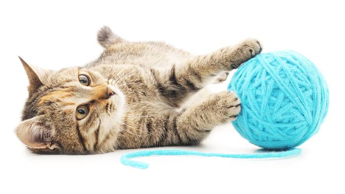 Cat with ball of yarn