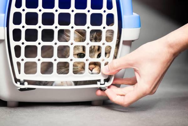 gato-caixa-transporte
