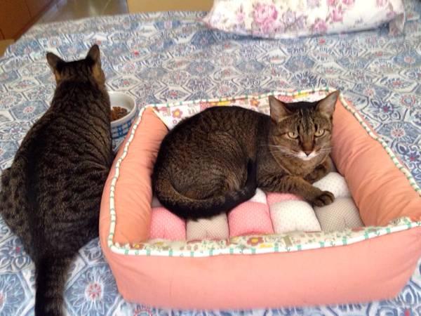 gatos-na-cama