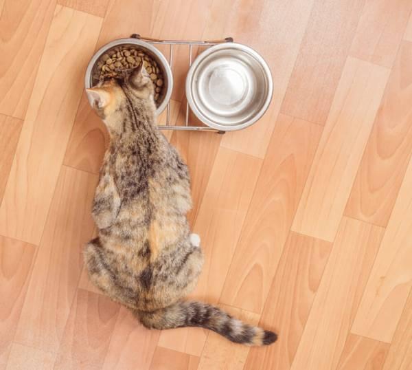 seu-gato-de-estimacao-nao-bebe-agua-saiba-o-que-fazer-770x691