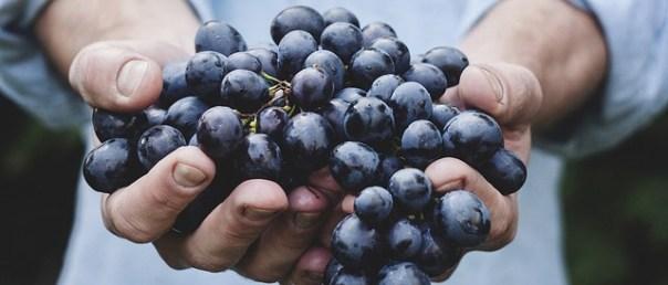 uvas-famosas-vinho