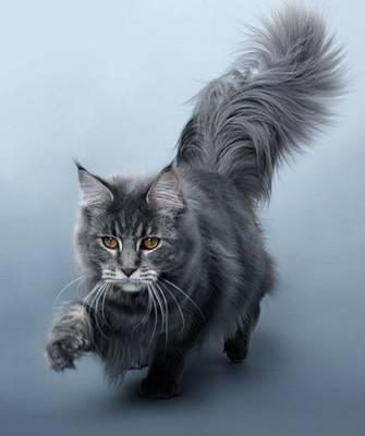 gato pelo333