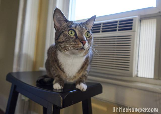 luna-sitting-in-front-of-ac-looking-forward-and-right