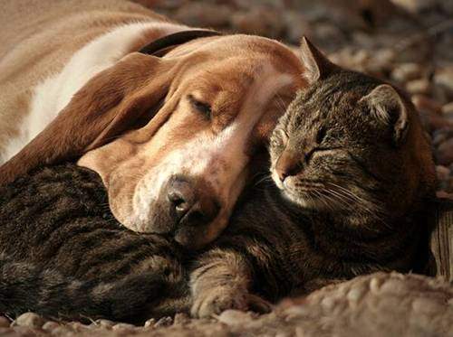 gato e cachorro deitados