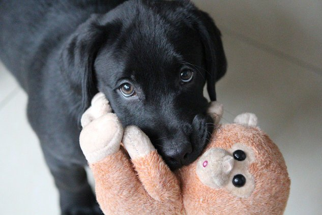 cachorro com brinquedo