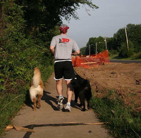 cachorro correndo taliesin